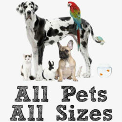 affordable-pet-sitting